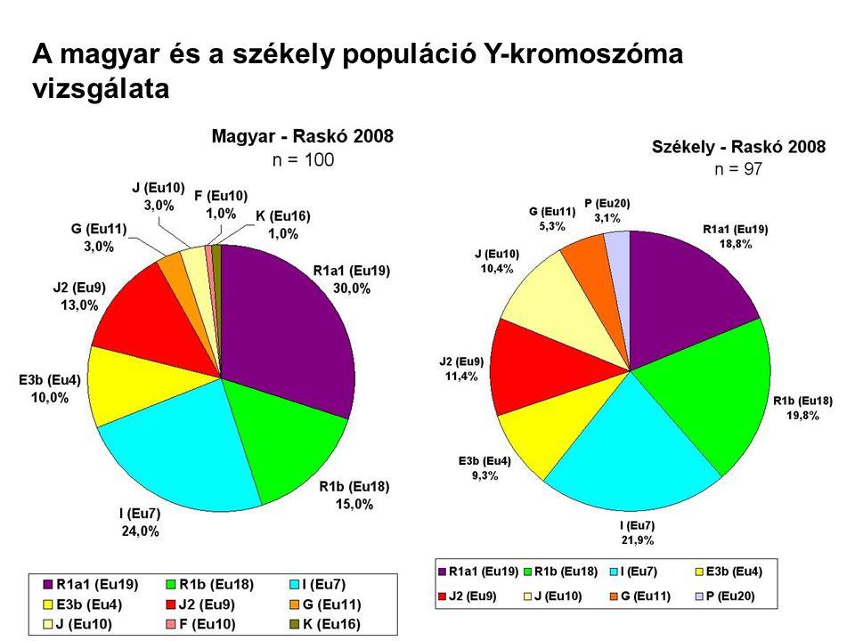 A magyar és a székely populáció Y-kromoszóma vizsgálata