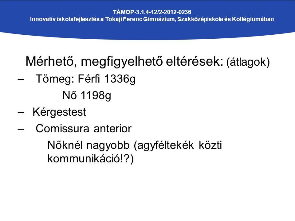 Mérhető, megfigyelhető eltérések: (átlagok) – Tömeg: Férfi 1336g Nő 1198g –Kérgestest – Comissura anterior Nőknél nagyobb (agyféltekék közti kommunikáció! ) TÁMOP-3.1.4-12/2-2012-0236 Innovatív iskolafejlesztés a Tokaji Ferenc Gimnázium, Szakközépiskola és Kollégiumában