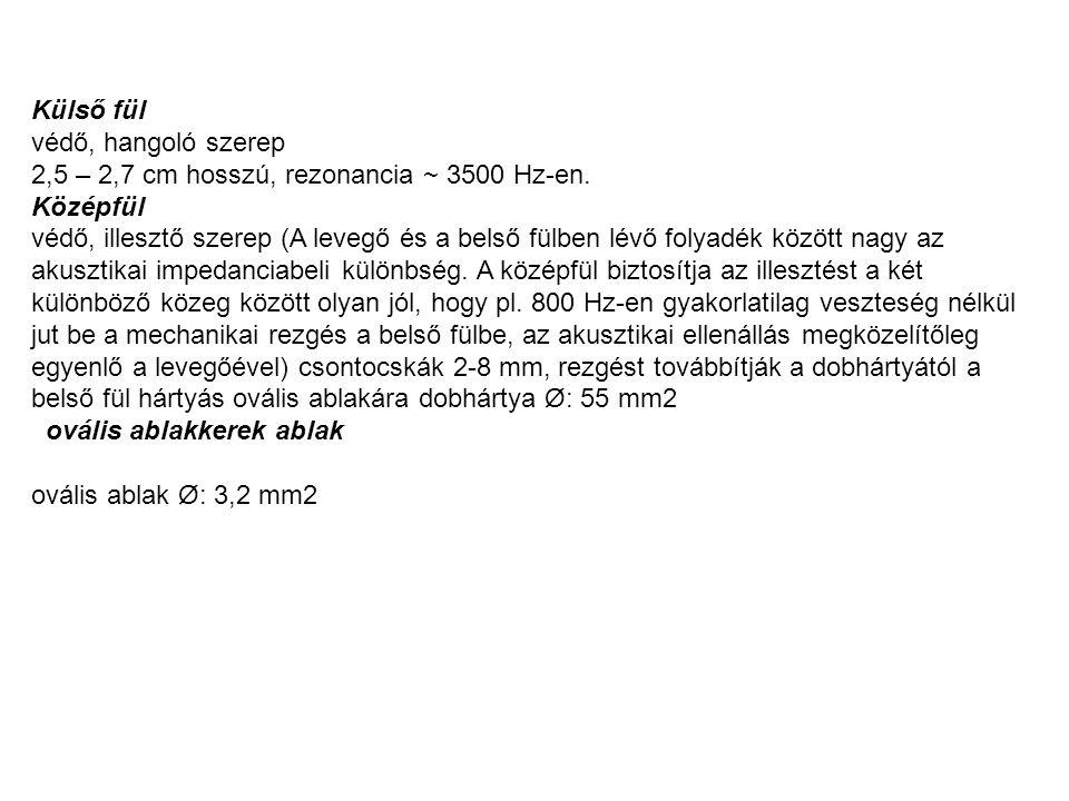 Külső fül védő, hangoló szerep 2,5 – 2,7 cm hosszú, rezonancia ~ 3500 Hz-en.