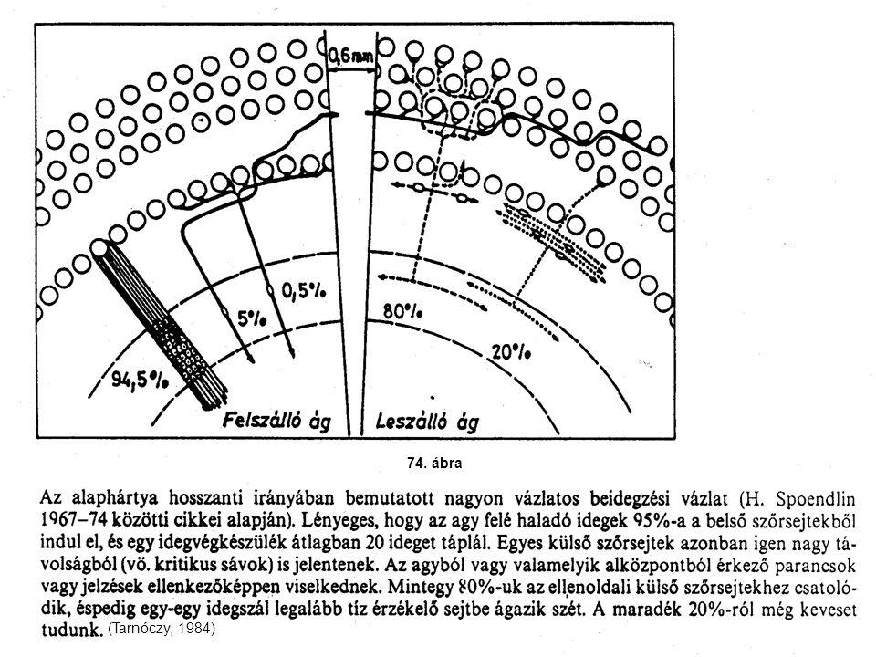74. ábra (Tarnóczy, 1984)