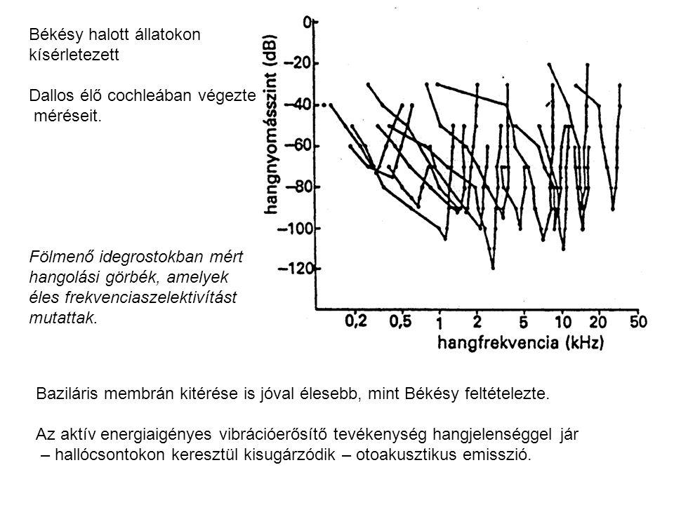 Békésy halott állatokon kísérletezett Dallos élő cochleában végezte méréseit. Fölmenő idegrostokban mért hangolási görbék, amelyek éles frekvenciaszel