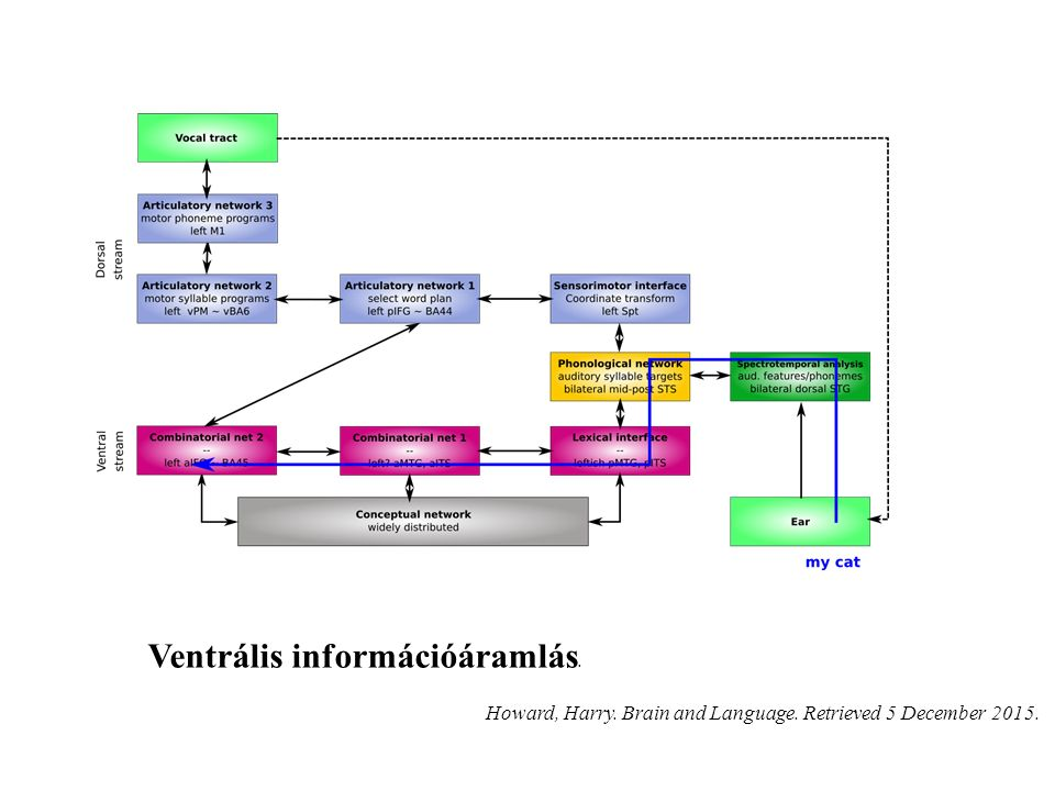 Ventrális információáramlás. Howard, Harry. Brain and Language. Retrieved 5 December 2015.