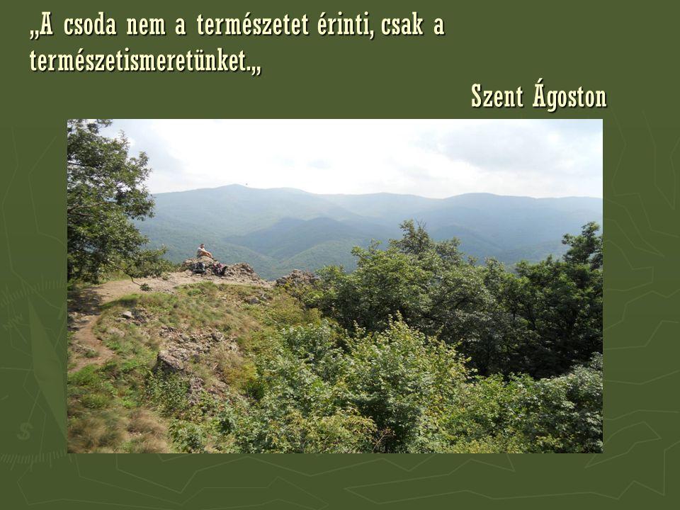 """""""A csoda nem a természetet érinti, csak a természetismeretünket."""" Szent Ágoston"""