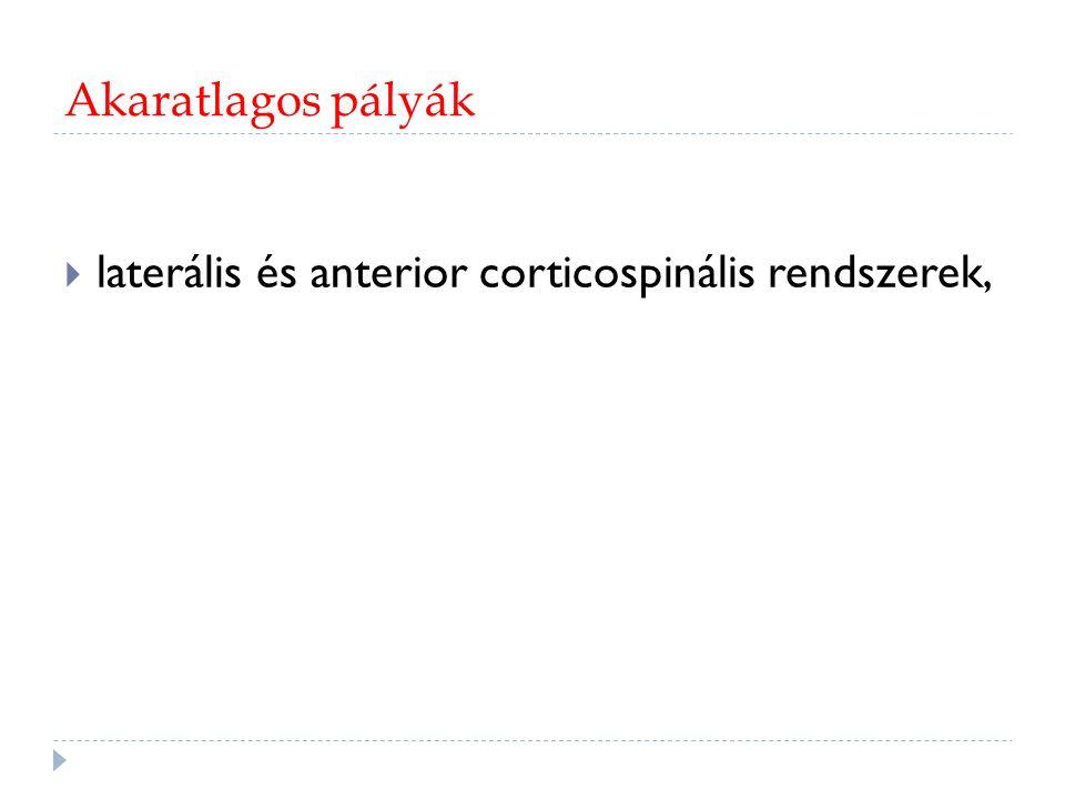 Dorsolaterálisok: disztális kontralaterális végtag Corticospinális: közvetlen.