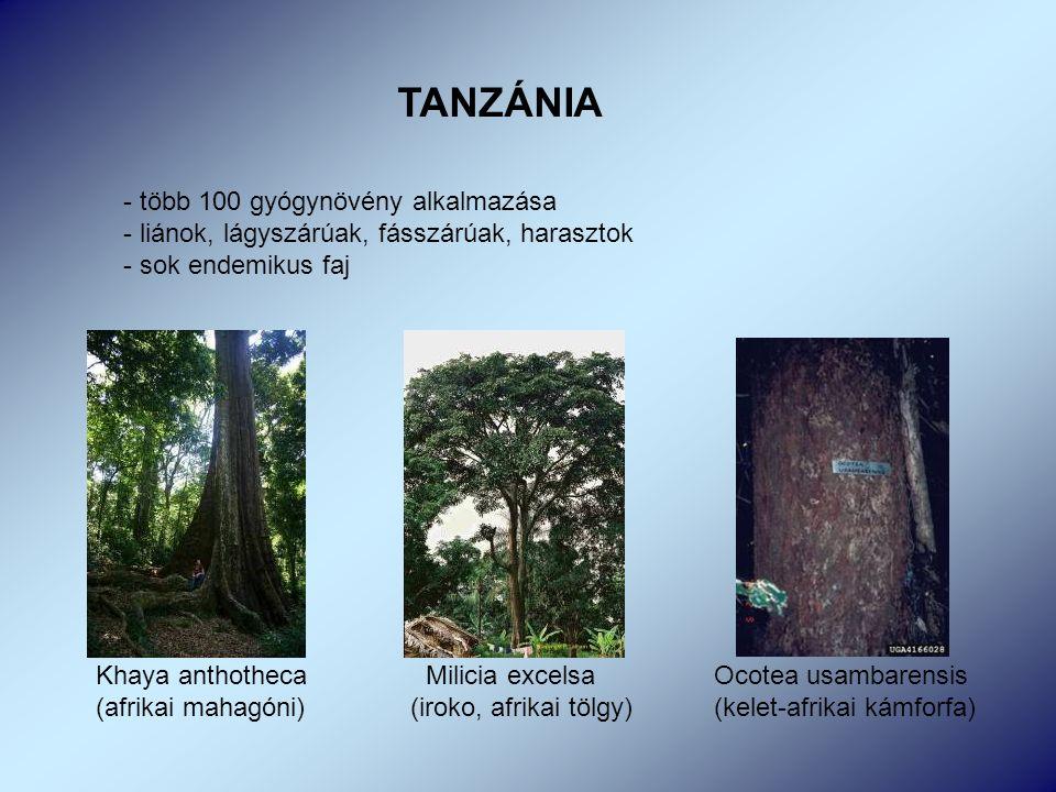 TANZÁNIA - több 100 gyógynövény alkalmazása - liánok, lágyszárúak, fásszárúak, harasztok - sok endemikus faj Khaya anthotheca Milicia excelsa Ocotea usambarensis (afrikai mahagóni) (iroko, afrikai tölgy) (kelet-afrikai kámforfa)