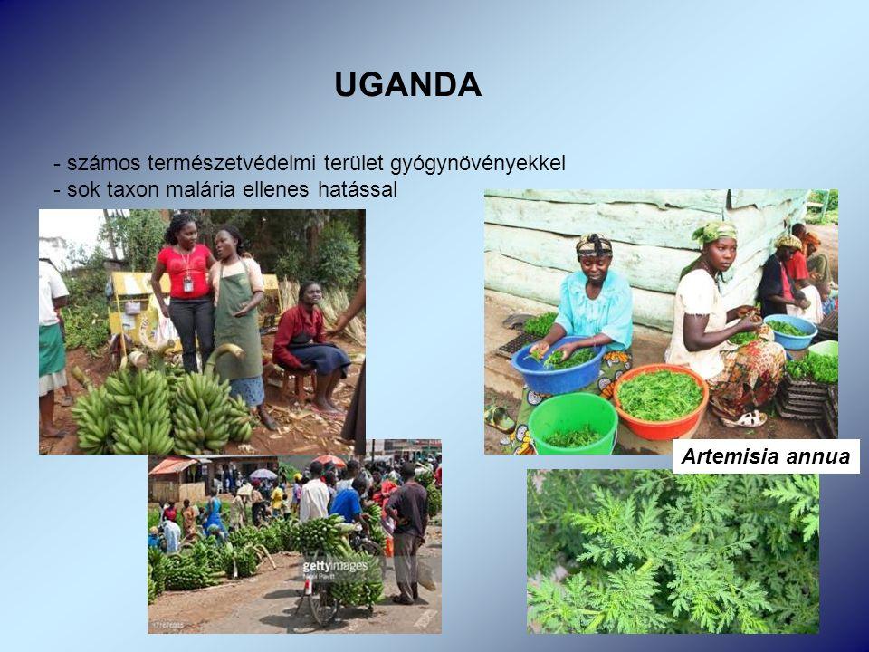 UGANDA - számos természetvédelmi terület gyógynövényekkel - sok taxon malária ellenes hatással Artemisia annua