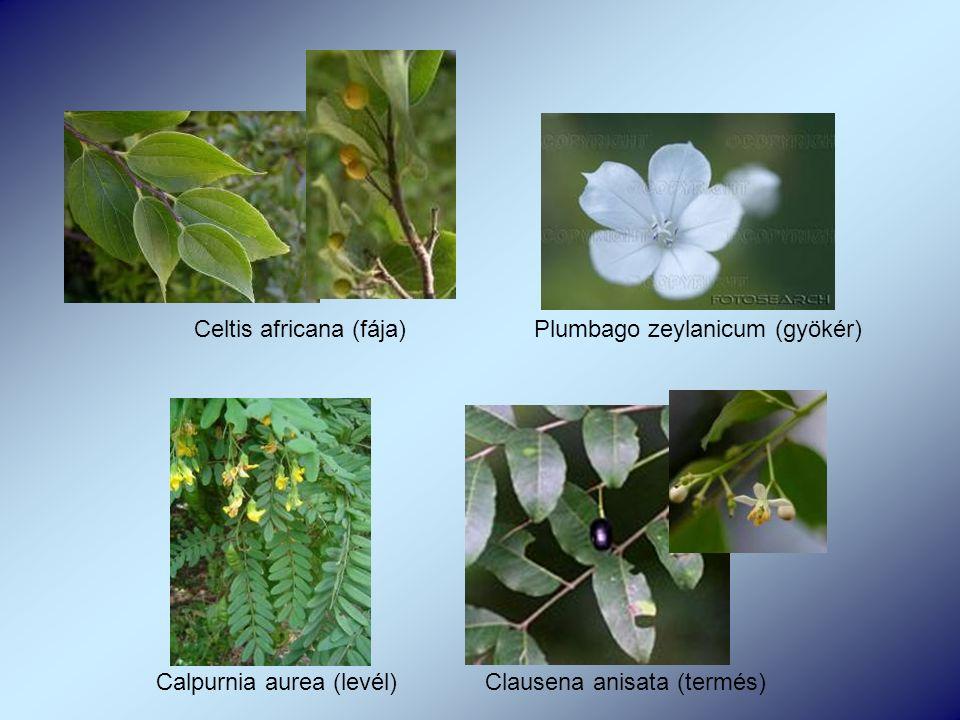 Celtis africana (fája) Plumbago zeylanicum (gyökér) Calpurnia aurea (levél) Clausena anisata (termés)