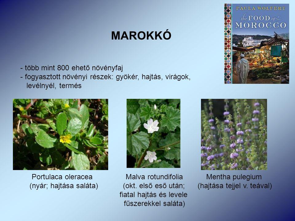 MAROKKÓ - több mint 800 ehető növényfaj - fogyasztott növényi részek: gyökér, hajtás, virágok, levélnyél, termés Portulaca oleracea Malva rotundifolia Mentha pulegium (nyár; hajtása saláta) (okt.