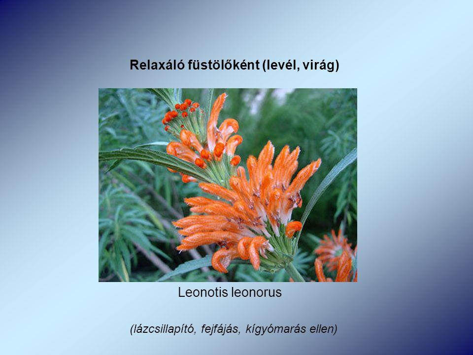 Leonotis leonorus Relaxáló füstölőként (levél, virág) (lázcsillapító, fejfájás, kígyómarás ellen)