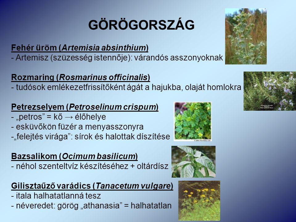 """Fehér üröm (Artemisia absinthium) - Artemisz (szüzesség istennője): várandós asszonyoknak Rozmaring (Rosmarinus officinalis) - tudósok emlékezetfrissítőként ágát a hajukba, olaját homlokra Petrezselyem (Petroselinum crispum) - """"petros = kő → élőhelye - esküvőkön füzér a menyasszonyra -""""felejtés virága : sírok és halottak díszítése Bazsalikom (Ocimum basilicum) - néhol szenteltvíz készítéséhez + oltárdísz Gilisztaűző varádics (Tanacetum vulgare) - itala halhatatlanná tesz - néveredet: görög """"athanasia = halhatatlan GÖRÖGORSZÁG"""