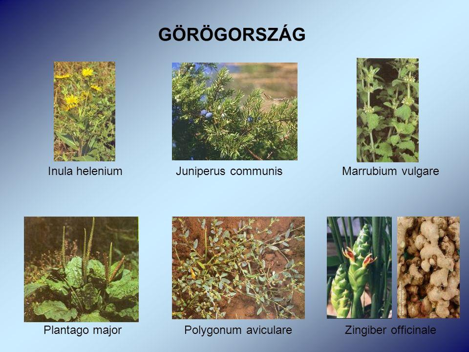 Inula helenium Juniperus communis Marrubium vulgare Plantago major Polygonum aviculare Zingiber officinale