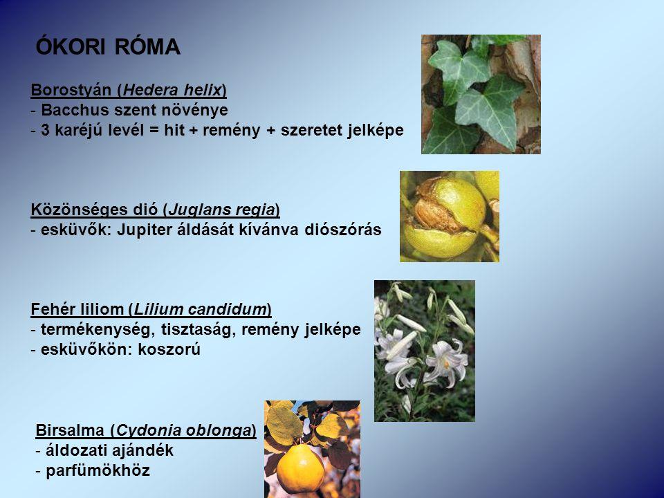 Borostyán (Hedera helix) - Bacchus szent növénye - 3 karéjú levél = hit + remény + szeretet jelképe Közönséges dió (Juglans regia) - esküvők: Jupiter áldását kívánva diószórás Fehér liliom (Lilium candidum) - termékenység, tisztaság, remény jelképe - esküvőkön: koszorú ÓKORI RÓMA Birsalma (Cydonia oblonga) - áldozati ajándék - parfümökhöz
