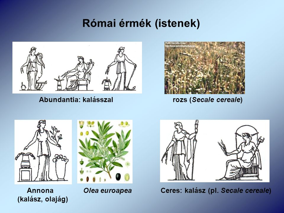 Római érmék (istenek) Abundantia: kalásszal rozs (Secale cereale) Annona Olea euroapea (kalász, olajág) Ceres: kalász (pl.