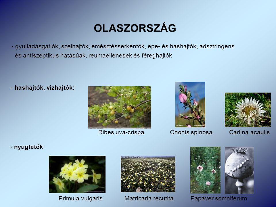 OLASZORSZÁG - gyulladásgátlók, szélhajtók, emésztésserkentők, epe- és hashajtók, adsztringens és antiszeptikus hatásúak, reumaellenesek és féreghajtók - hashajtók, vízhajtók: Ribes uva-crispa Ononis spinosa Carlina acaulis - nyugtatók: Primula vulgaris Matricaria recutita Papaver somniferum