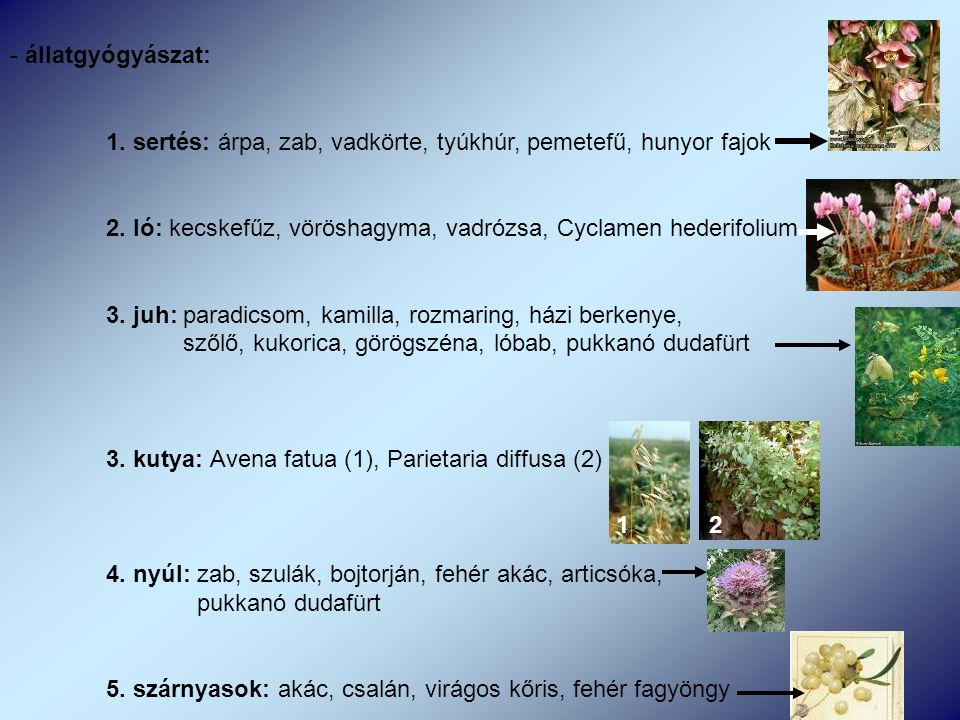 - állatgyógyászat: 1. sertés: árpa, zab, vadkörte, tyúkhúr, pemetefű, hunyor fajok 2.