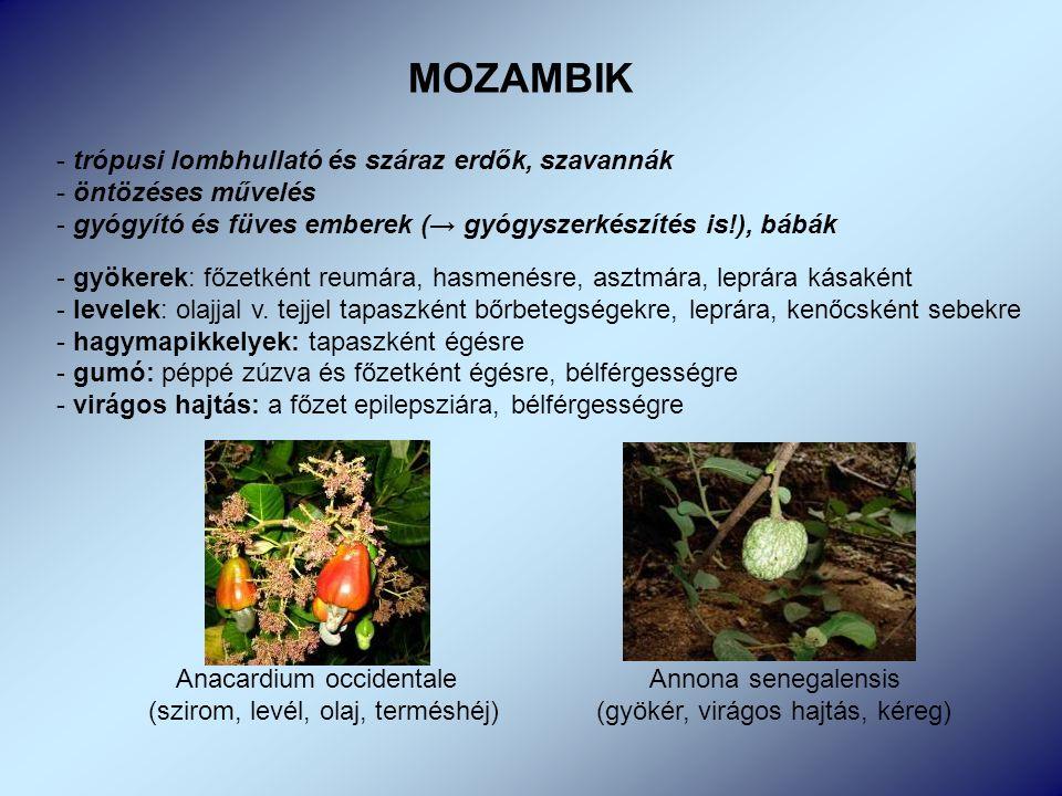 MOZAMBIK - trópusi lombhullató és száraz erdők, szavannák - öntözéses művelés - gyógyító és füves emberek (→ gyógyszerkészítés is!), bábák - gyökerek: főzetként reumára, hasmenésre, asztmára, leprára kásaként - levelek: olajjal v.