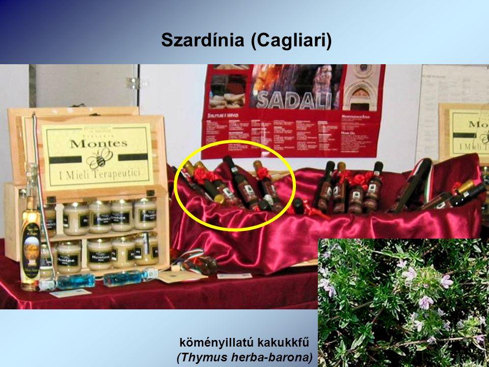 Szardínia (Cagliari) köményillatú kakukkfű (Thymus herba-barona)