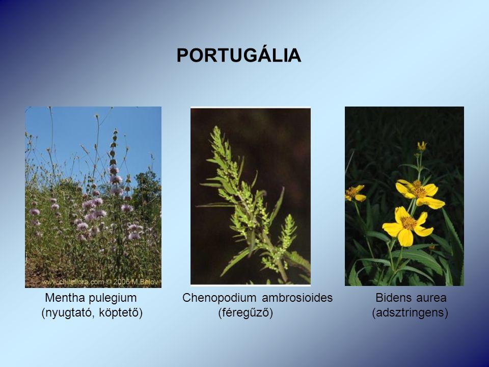 Mentha pulegium Chenopodium ambrosioides Bidens aurea (nyugtató, köptető) (féregűző) (adsztringens)