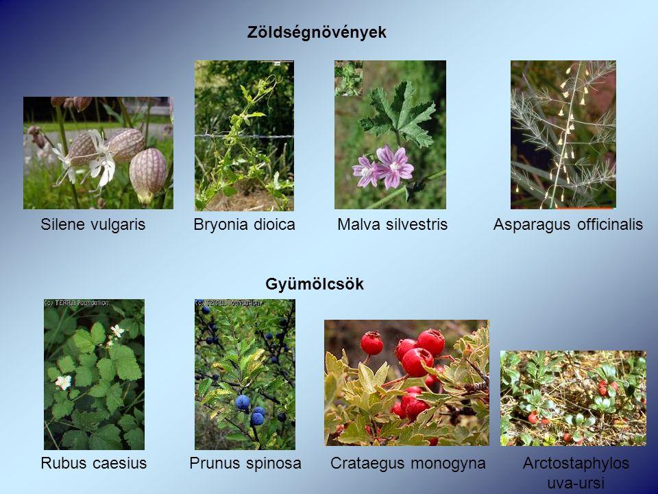 Zöldségnövények Silene vulgaris Bryonia dioica Malva silvestris Asparagus officinalis Gyümölcsök Rubus caesius Prunus spinosa Crataegus monogyna Arctostaphylos uva-ursi