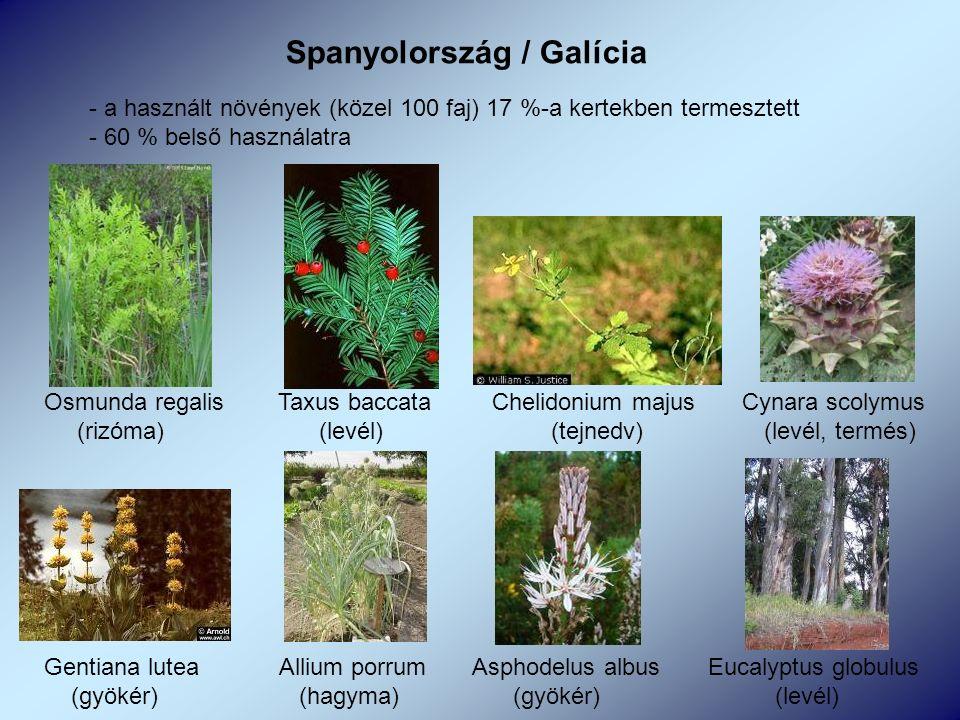 Spanyolország / Galícia - a használt növények (közel 100 faj) 17 %-a kertekben termesztett - 60 % belső használatra Osmunda regalis Taxus baccata Chelidonium majus Cynara scolymus (rizóma) (levél) (tejnedv) (levél, termés) Gentiana lutea Allium porrum Asphodelus albus Eucalyptus globulus (gyökér) (hagyma) (gyökér) (levél)