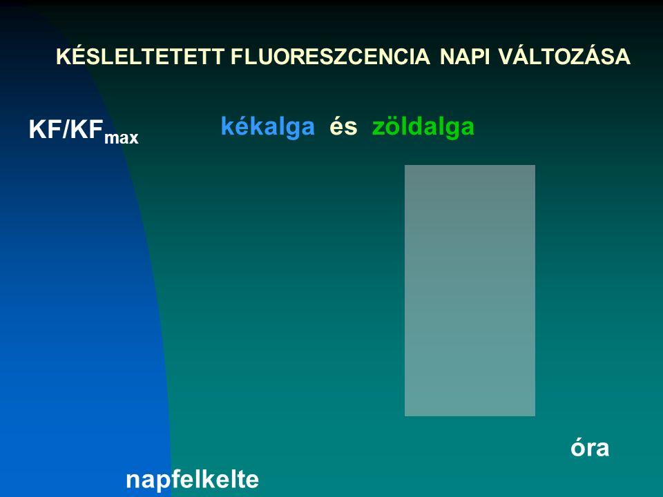 KÉSLELTETETT FLUORESZCENCIA NAPI VÁLTOZÁSA KF/KF max kékalga és zöldalga óra napfelkelte