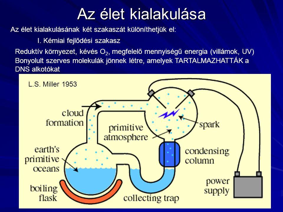 L.S. Miller 1953 Az élet kialakulása Az élet kialakulásának két szakaszát különíthetjük el: I. Kémiai fejlődési szakasz Reduktív környezet, kévés O 2,