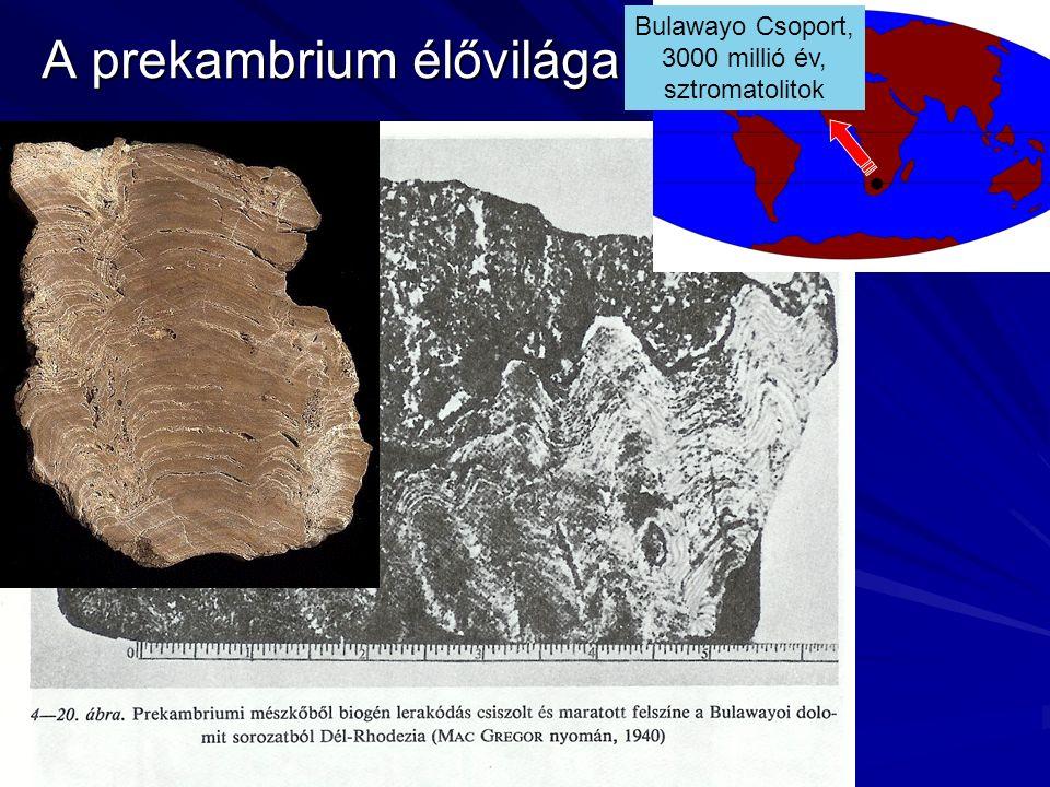 A prekambrium élővilága Bulawayo Csoport, 3000 millió év, sztromatolitok