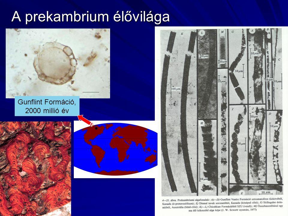 A prekambrium élővilága Gunflint Formáció, 2000 millió év