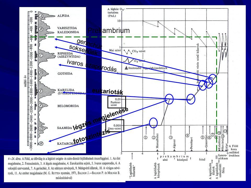 légzés megjelenése eukarioták ivaros szaporodás soksejtűek gerinchúr Prekambrium fotoszintézis