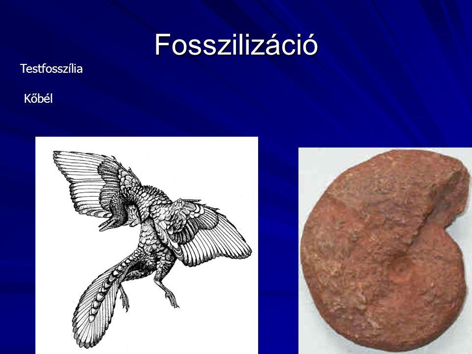 Fosszilizáció Testfosszília Kőbél