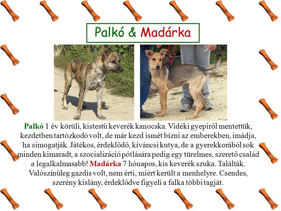 Palkó & Madárka Palkó 1 év körüli, kistestű keverék kanocska.