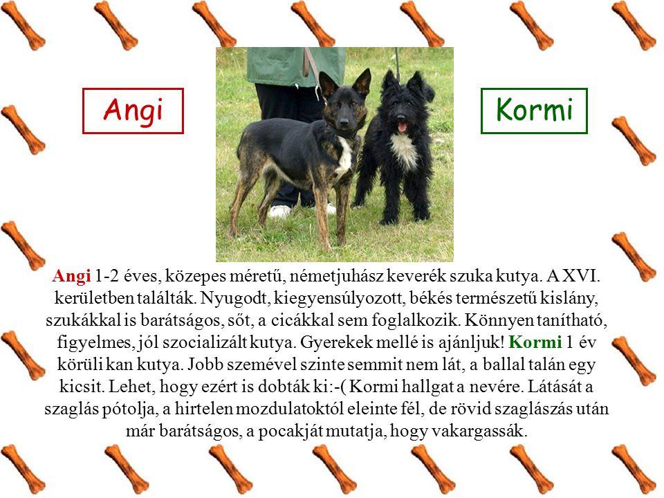 Angi 1-2 éves, közepes méretű, németjuhász keverék szuka kutya.