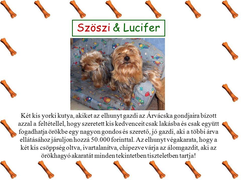 Szöszi & Lucifer Két kis yorki kutya, akiket az elhunyt gazdi az Árvácska gondjaira bízott azzal a feltétellel, hogy szeretett kis kedvenceit csak lakásba és csak együtt fogadhatja örökbe egy nagyon gondos és szerető, jó gazdi, aki a többi árva ellátásához járuljon hozzá 50.000 forinttal.