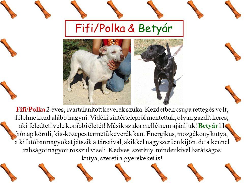 Fifi/Polka & Betyár Fifi/Polka 2 éves, ivartalanított keverék szuka.