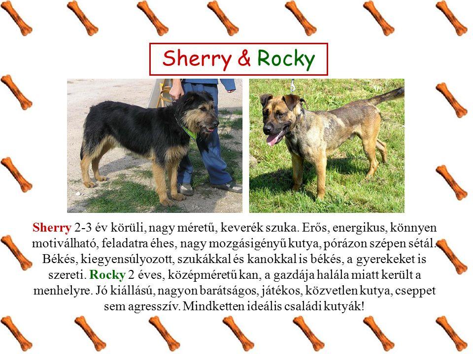 Quimby kb.2 éves, fekete, középméretű, snaci-mix kan kutya.