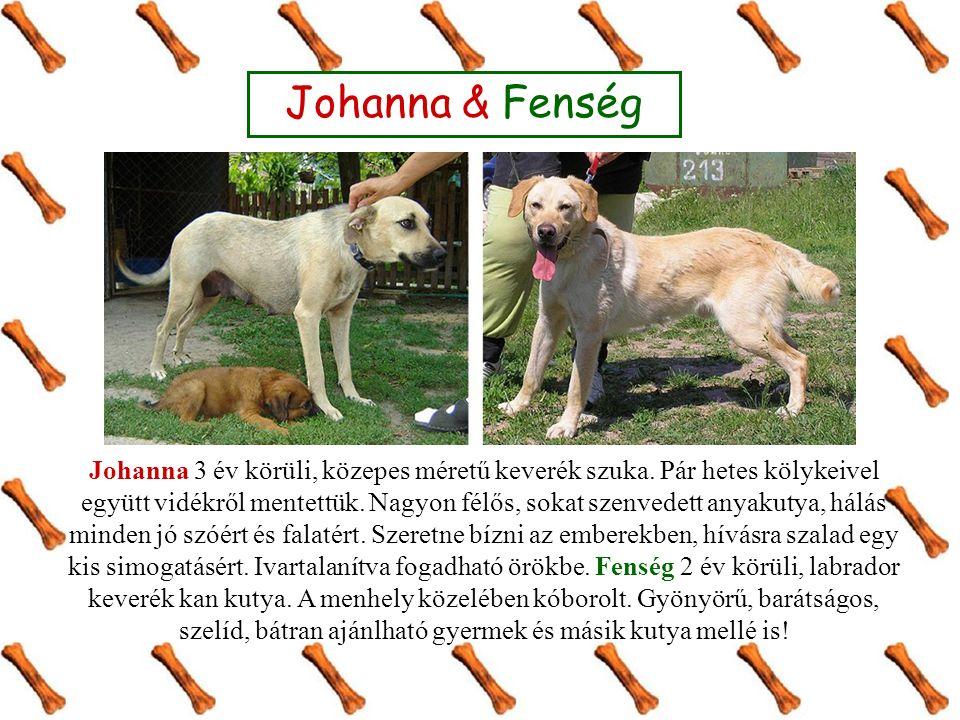 Johanna & Fenség Johanna 3 év körüli, közepes méretű keverék szuka.