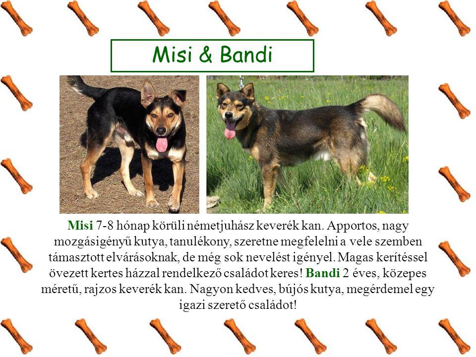 Misi & Bandi Misi 7-8 hónap körüli németjuhász keverék kan.