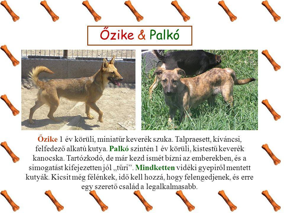 Őzike & Palkó Őzike 1 év körüli, miniatűr keverék szuka.