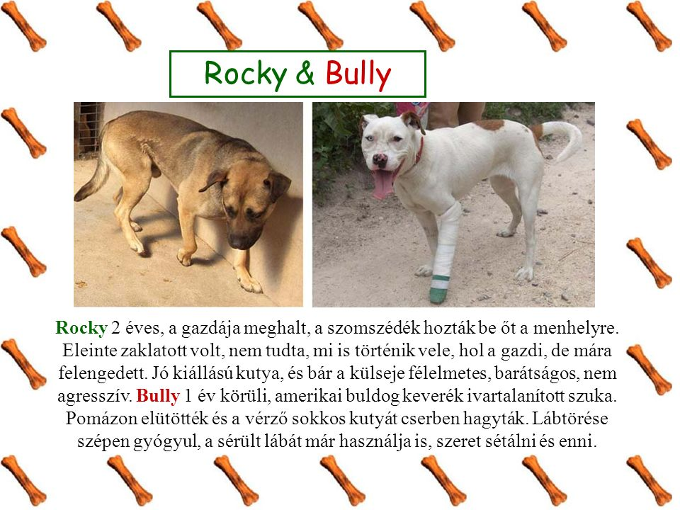 Rocky 2 éves, a gazdája meghalt, a szomszédék hozták be őt a menhelyre.