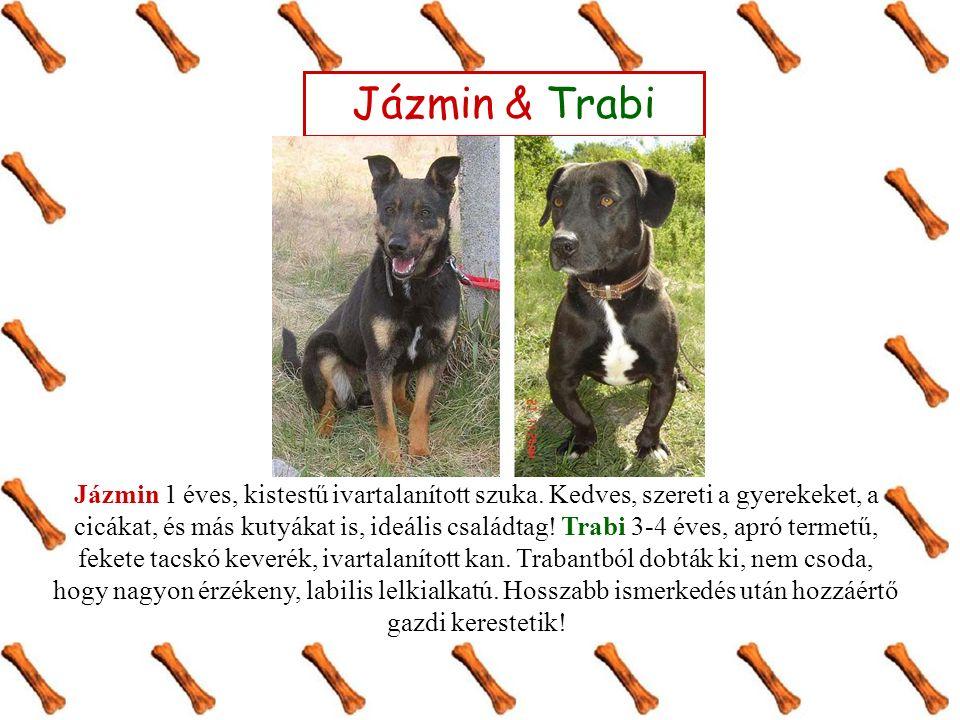 Jázmin & Trabi Jázmin 1 éves, kistestű ivartalanított szuka.