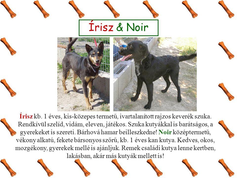 Írisz & Noir Írisz kb. 1 éves, kis-közepes termetű, ivartalanított rajzos keverék szuka.