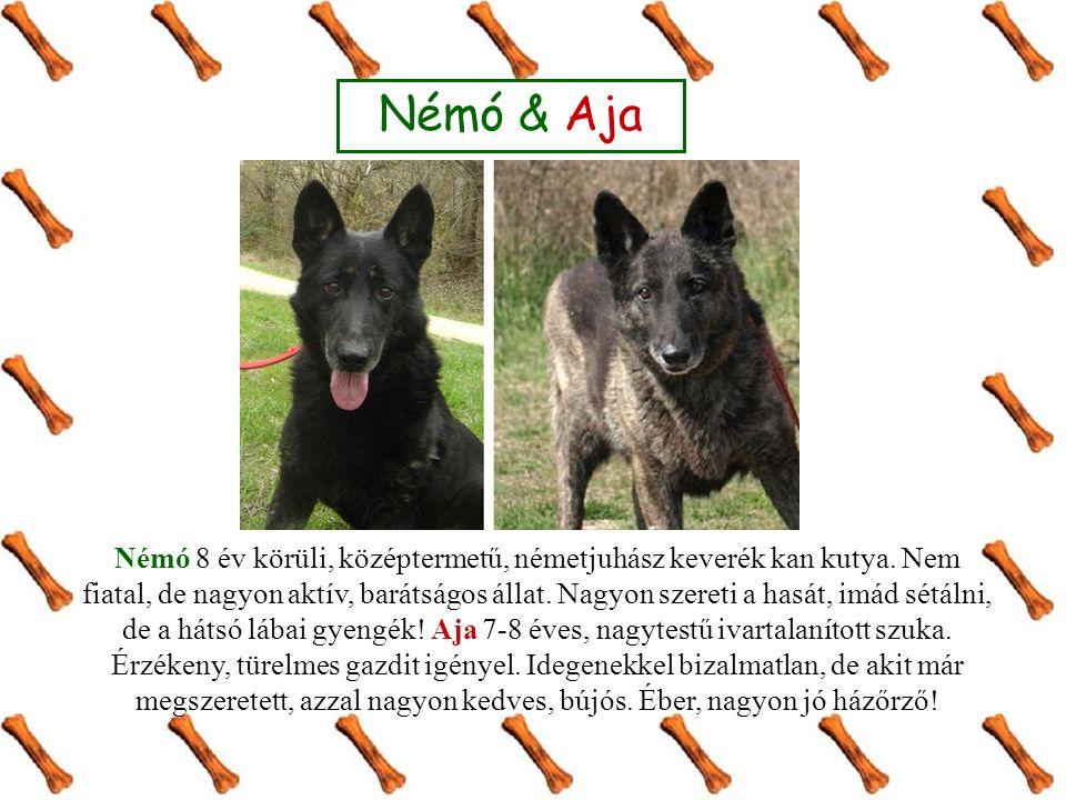 Némó & Aja Némó 8 év körüli, középtermetű, németjuhász keverék kan kutya.