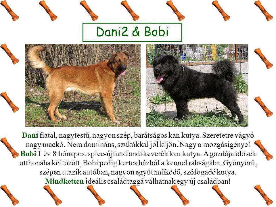 Dani2 & Bobi Dani fiatal, nagytestű, nagyon szép, barátságos kan kutya.