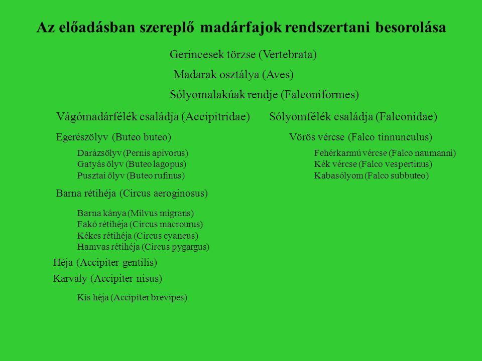 Egerészölyv (Buteo buteo) Vágómadárfélék családja (Accipitridae)