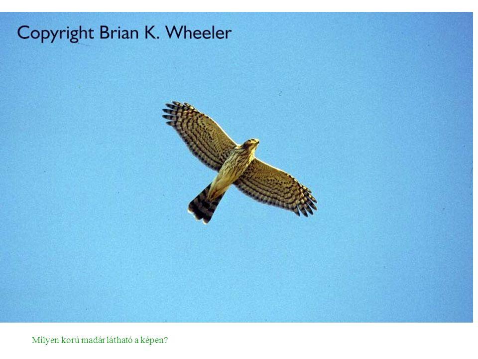 Milyen korú madár látható a képen