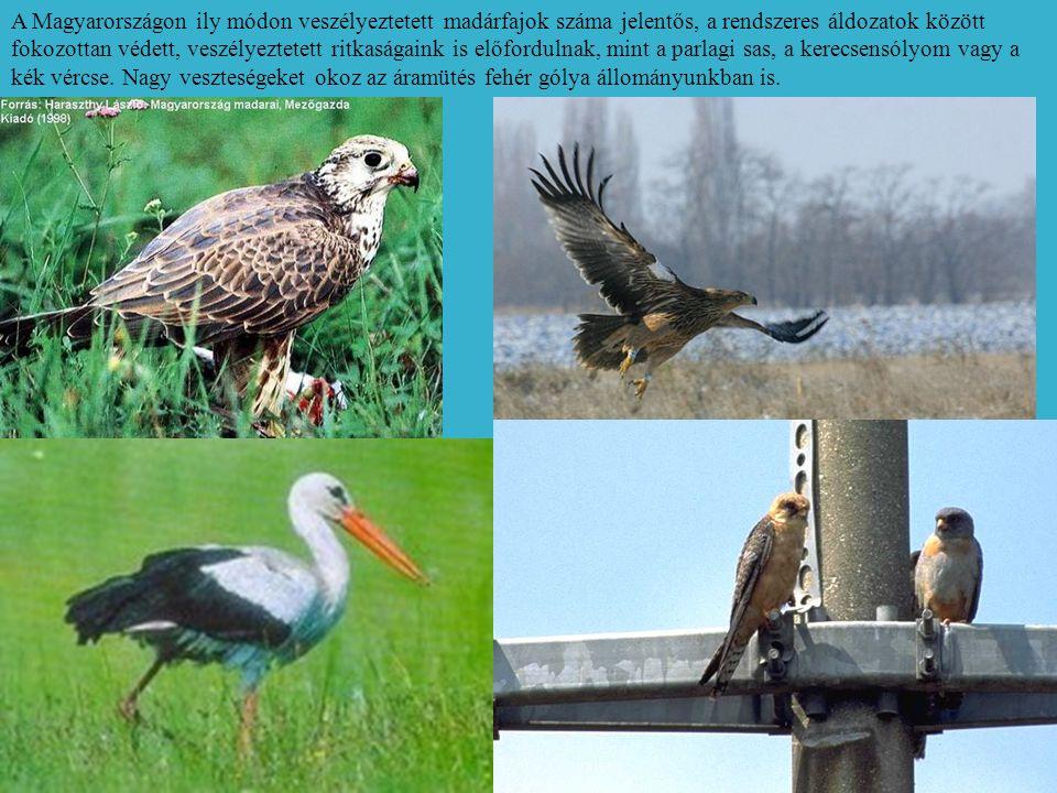 A Magyarországon ily módon veszélyeztetett madárfajok száma jelentős, a rendszeres áldozatok között fokozottan védett, veszélyeztetett ritkaságaink is előfordulnak, mint a parlagi sas, a kerecsensólyom vagy a kék vércse.