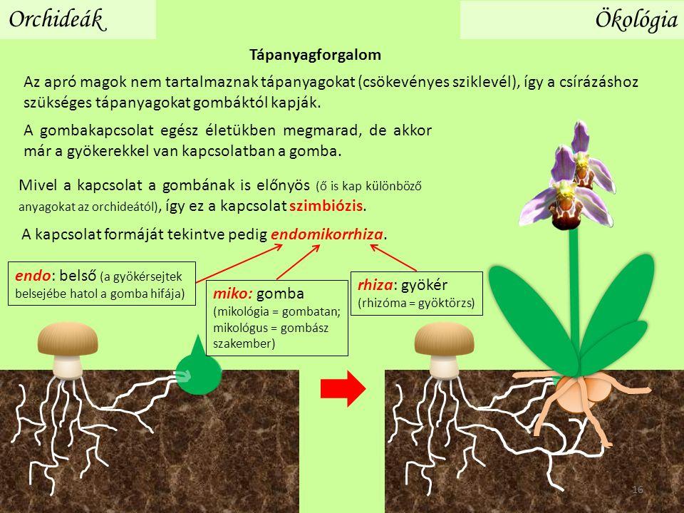Az apró magok nem tartalmaznak tápanyagokat (csökevényes sziklevél), így a csírázáshoz szükséges tápanyagokat gombáktól kapják.