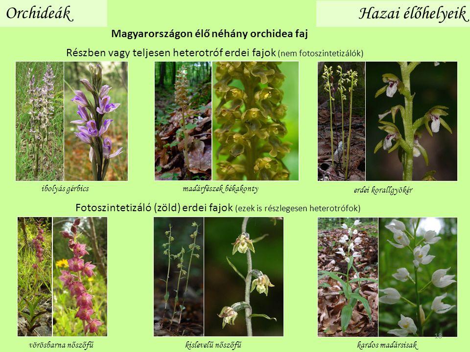 Orchideák Hazai élőhelyeik Magyarországon élő néhány orchidea faj madárfészek békakonty Részben vagy teljesen heterotróf erdei fajok (nem fotoszintetizálók) ibolyás gérbics erdei korallgyökér Fotoszintetizáló (zöld) erdei fajok (ezek is részlegesen heterotrófok) kardos madársisakvörösbarna nőszőfűkislevelű nőszőfű 18