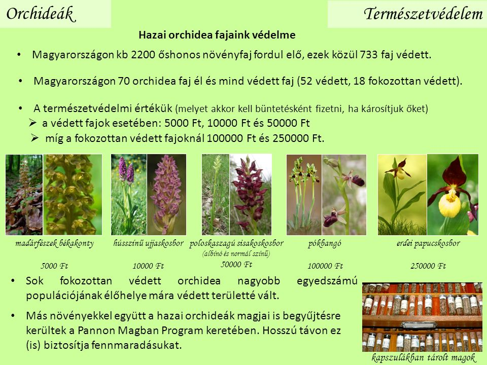 Orchideák Természetvédelem Hazai orchidea fajaink védelme Magyarországon kb 2200 őshonos növényfaj fordul elő, ezek közül 733 faj védett. A természetv