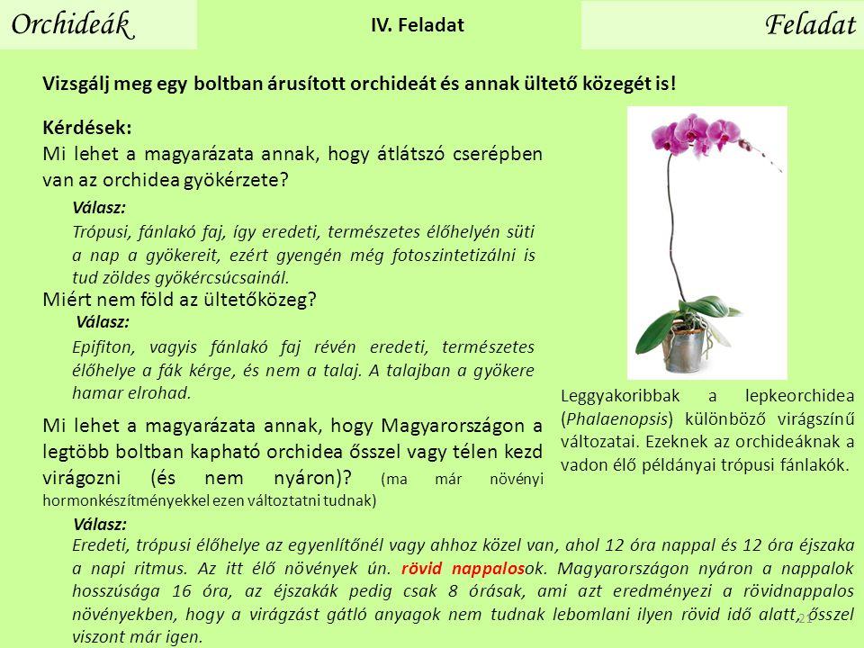 Vizsgálj meg egy boltban árusított orchideát és annak ültető közegét is! Orchideák Feladat IV. Feladat Kérdések: Mi lehet a magyarázata annak, hogy át